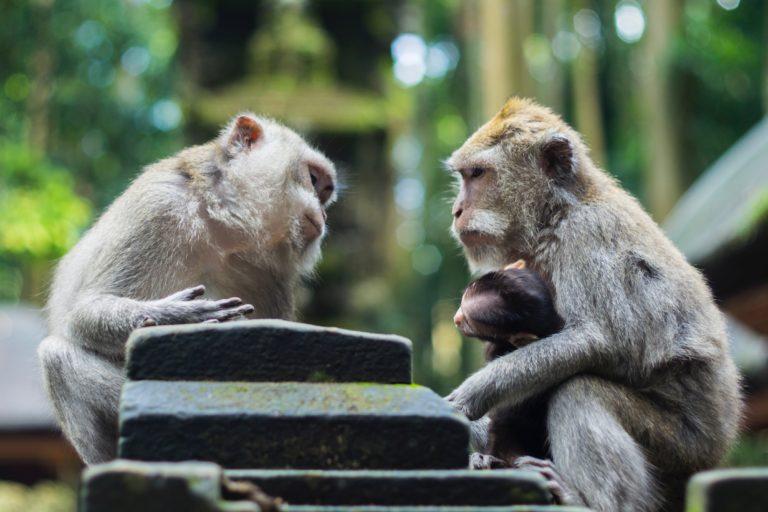 お猿のカウンセリング
